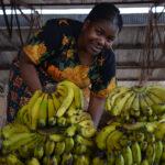 Africa, Tanzania, Iringa, mercato, frutta, donna, lavoro, commercio